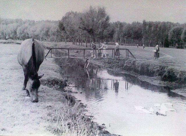 річка Золотоношка 04